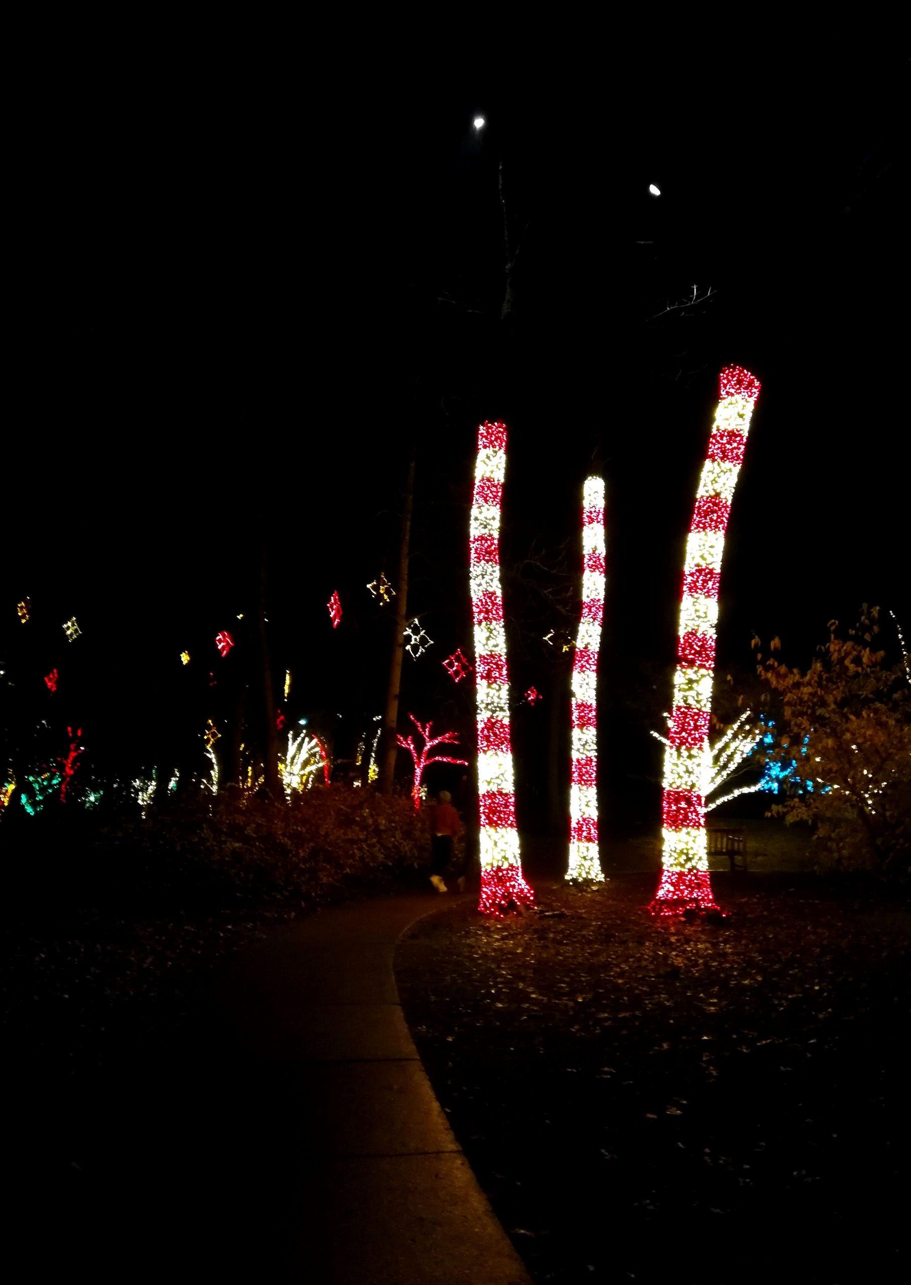 Chihuly Christmas Cheekwood Photos