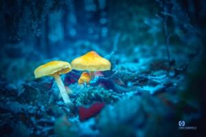 Pilz im Wald
