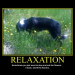 Motivational Poster: RELAXATION