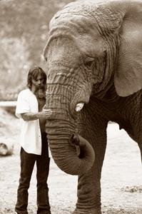 Chris Galluccis Elephant Photos