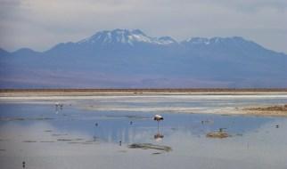 Flamingos and volcanoes