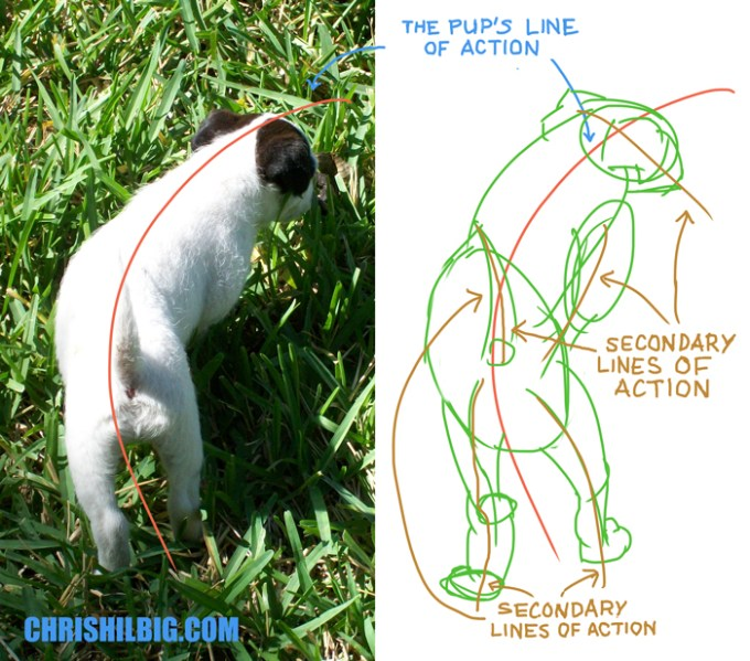 Pup and her lines of action with sketch