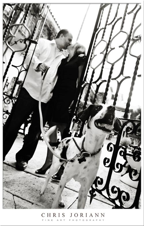 gate puppy