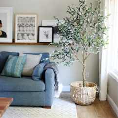 Living Room Tree Swivel Chairs For Australia Olive Trees Are The New Fiddle Leaf Fig Chris Loves Julia Historically Stand Peace And Friendship What More Could You Want In Your Home Recently We Added An To Our I Know