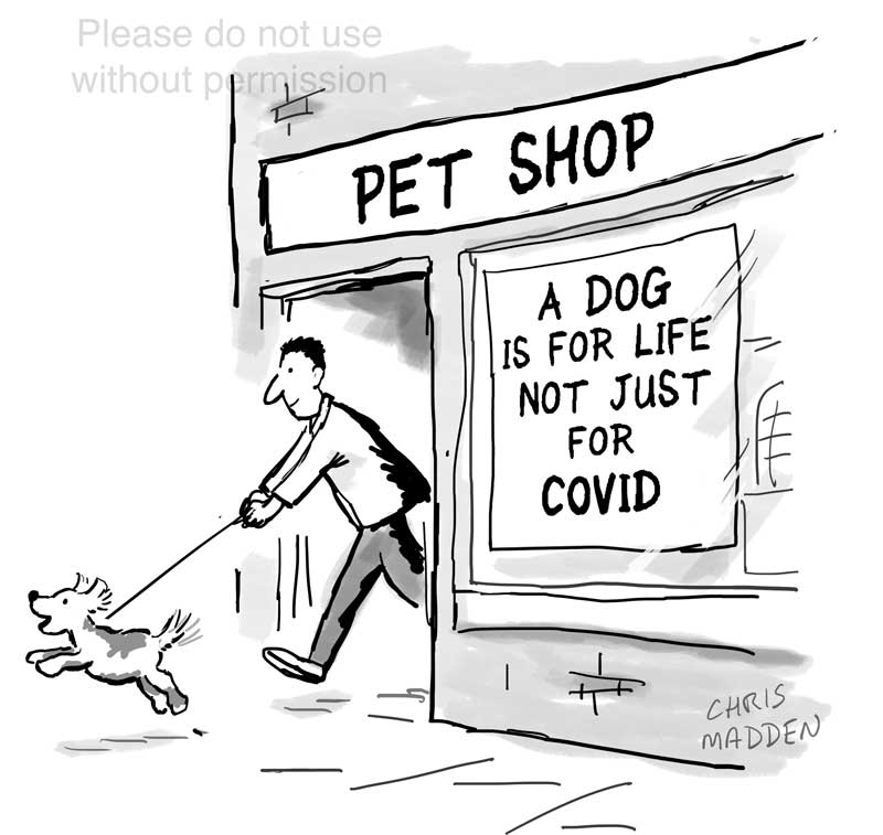 covid-19 buying puppies cartoon