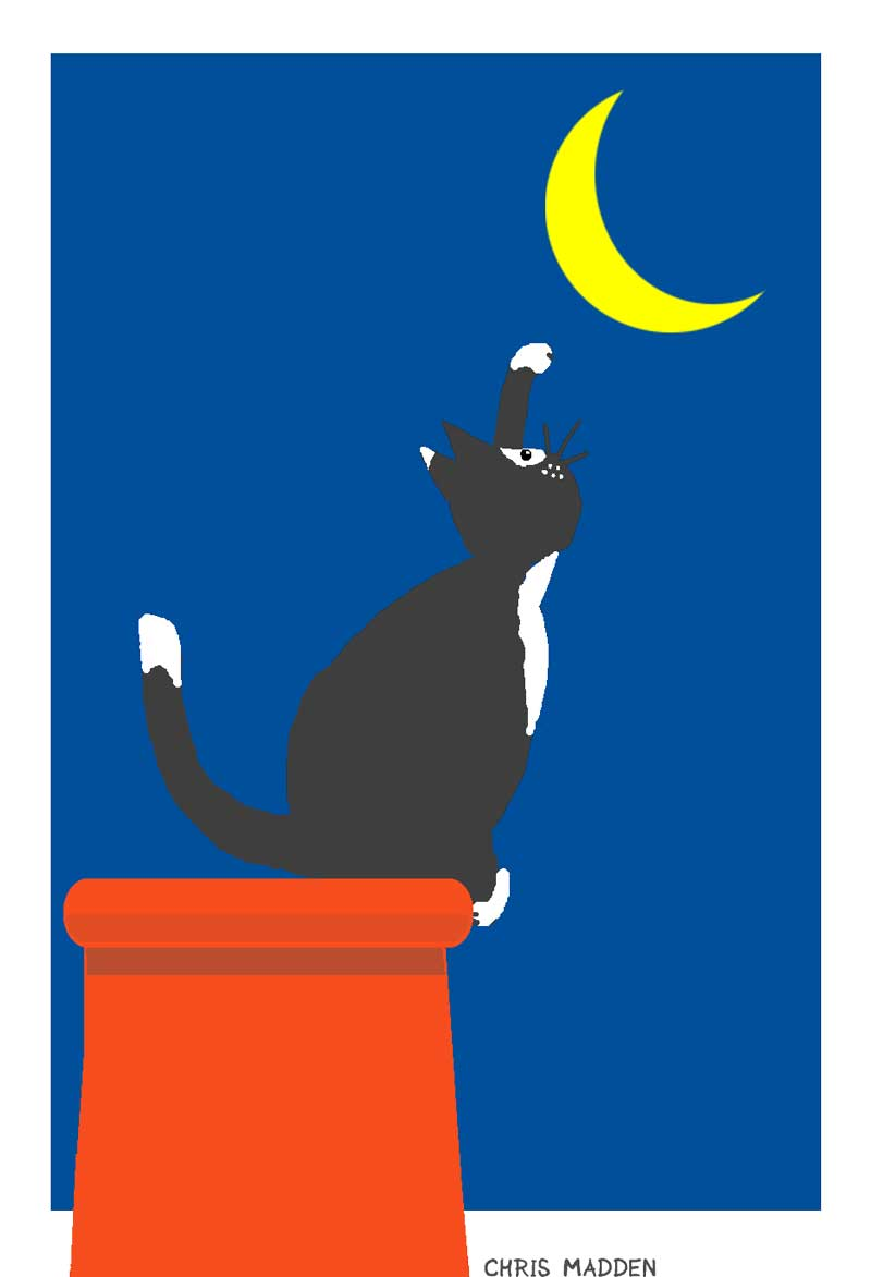 A cat reaching for the moon