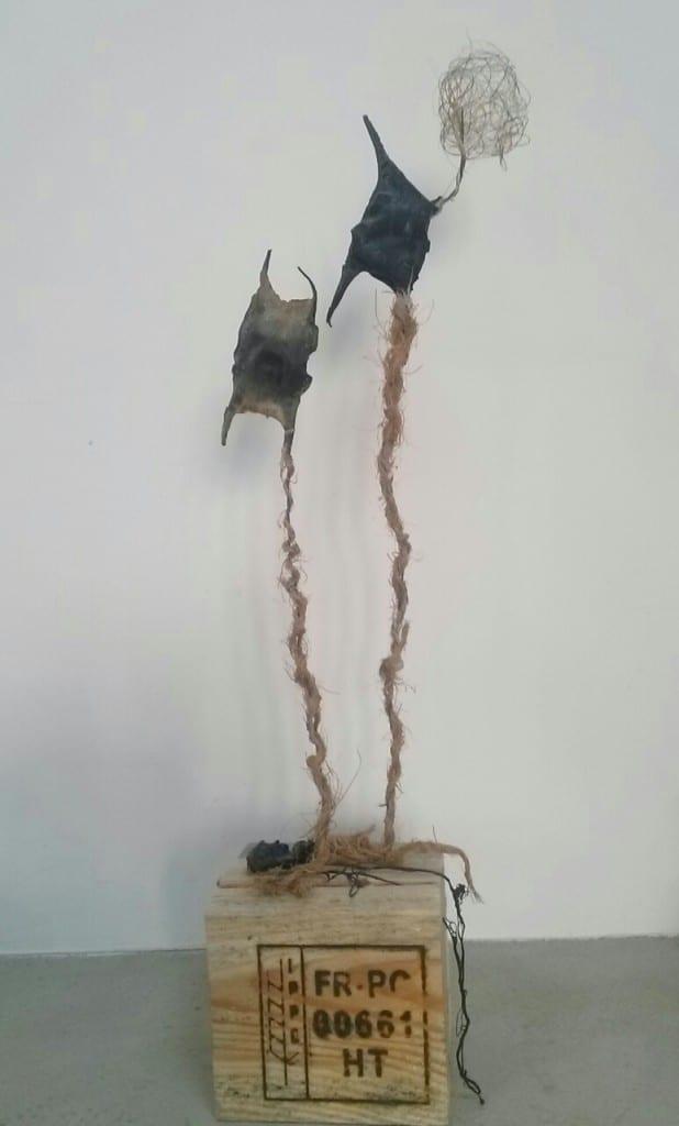capsule d'oeufs de raie, bois, fil, filasse, fil de fer