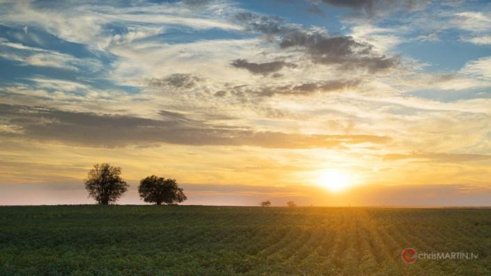 Cotton Field Sunset, Chattanooga, OK