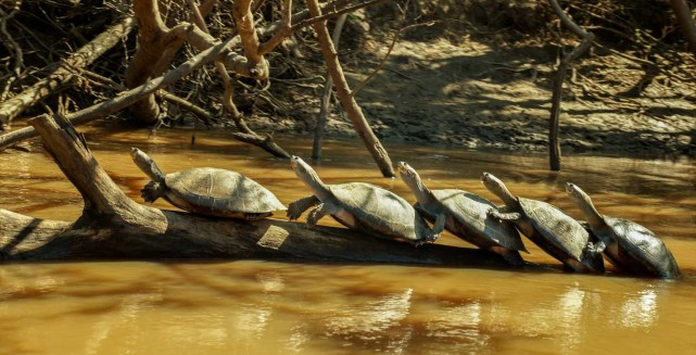 2013.08.13 Bolivia, Madidi National Park (1)