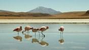 2013.08.13 Bolivia, Madidi National Park (14)