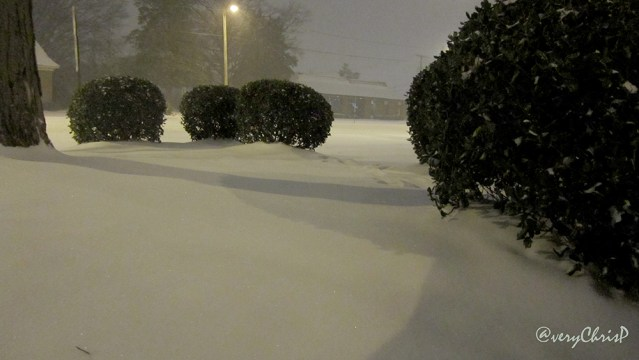 Snowfall in the bushes