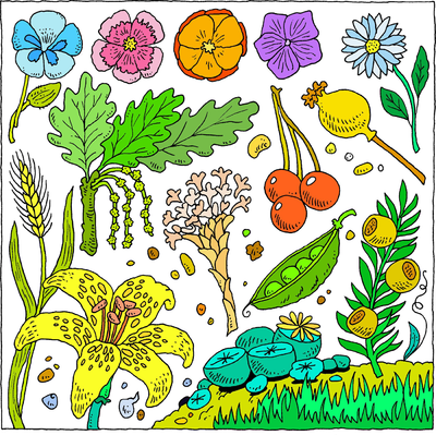 Image Let The Earth Bring Forth Grass The Herb That Yields Seed Garden Of Eden Clip Art