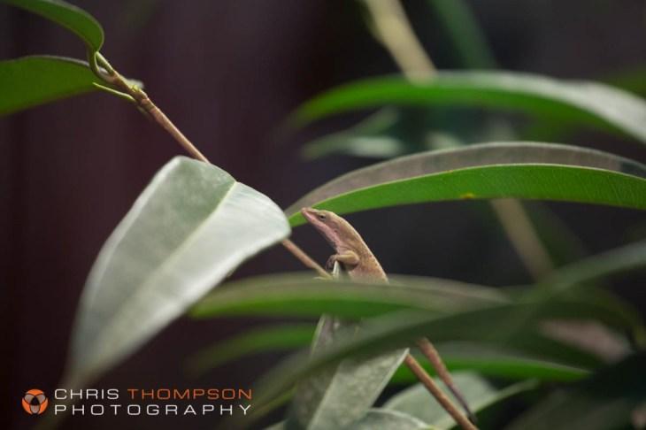 spokane-photographer-chris-thompson-photography-393
