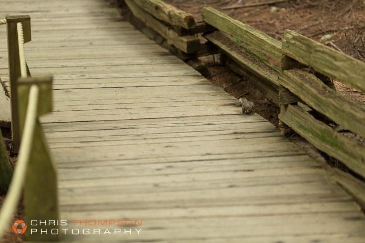 spokane-photography-chris-thompson-photographer-30