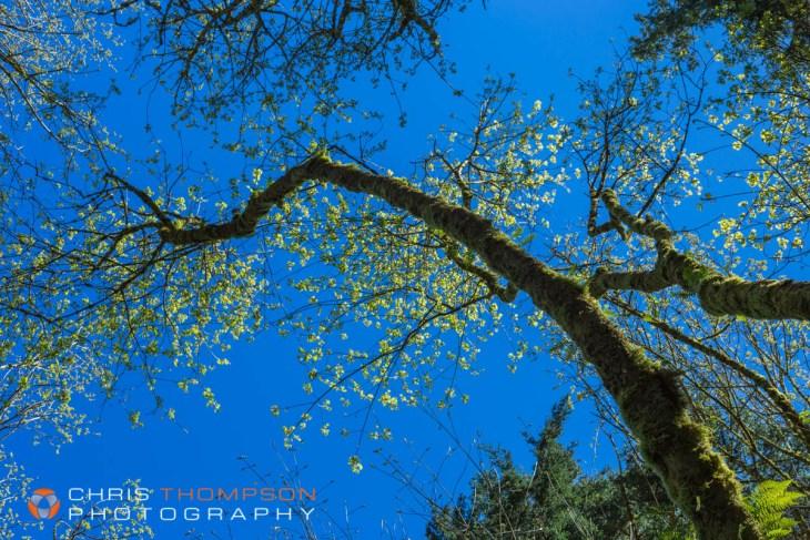 spokane-photographers-chris-thompson-16