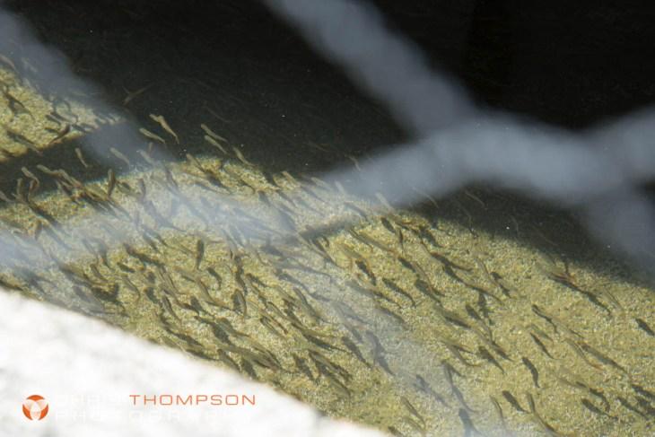 spokane-photographers-chris-thompson-34