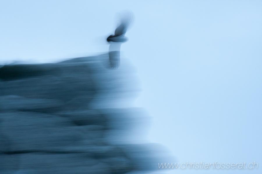Aves, Birds, Bubo Bubo, Eurasian Eagle-Owl, Grand_duc d'Europe, Strigidae, Strigidés, Strigiformes