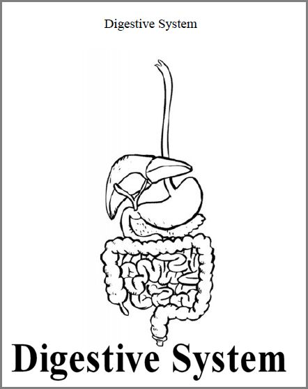 Sheep Digestive System Diagram Sketch Coloring Page