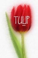 tulipu-copy1