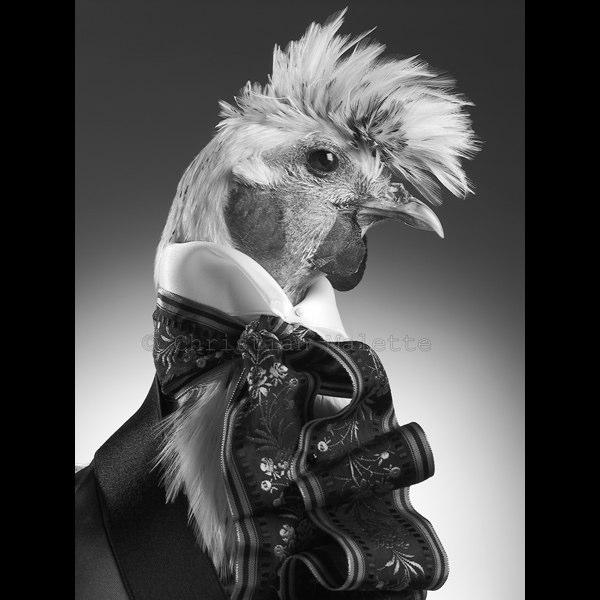 Photographe professionnel a Paris  animaux