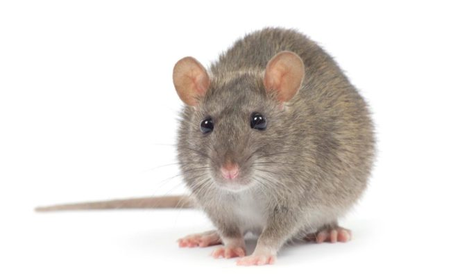 How Plumbing Leaks Can Attract Rodents And Pests
