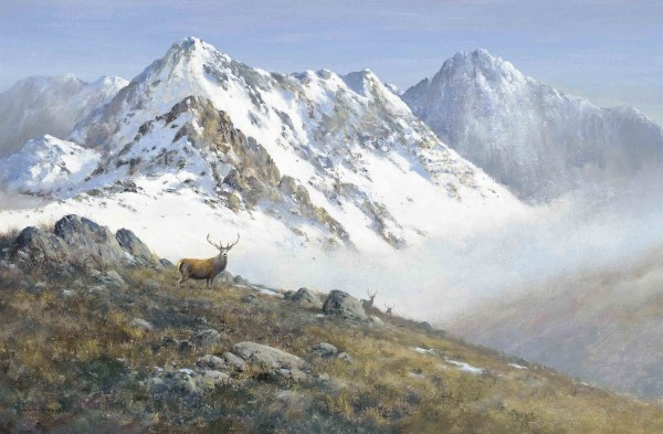 Scottish Red Deer Oil Painting