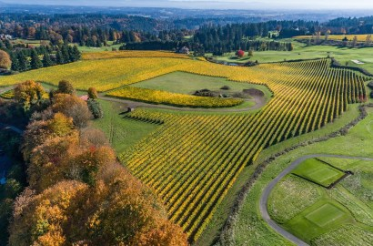 Vineyard Lifestyles: The Hobby Vineyard