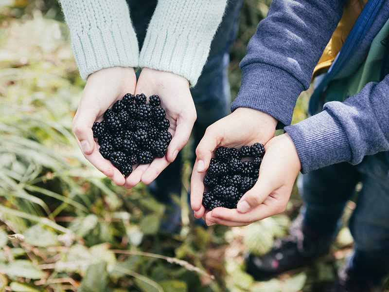 Foraging for plants, such as blackberries is an excellent way to embrace mindful eating