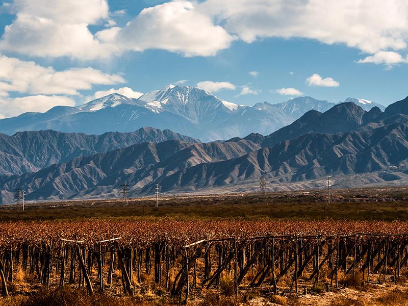 Volcano Aconcagua and Vineyard, Argentine province of Mendoza