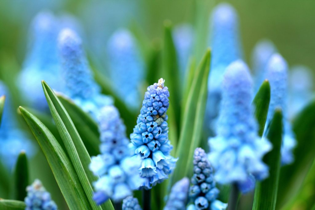seeing God through nature: flowers