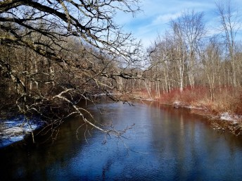 Leafless trees line a river under a blue sky