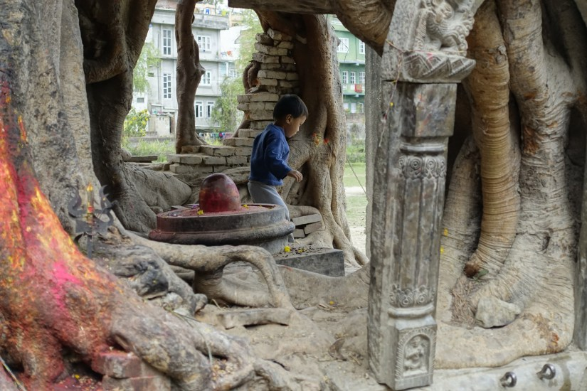 a linga and yoni shrine in a temple overgrown with trees with a child playing near the shrine