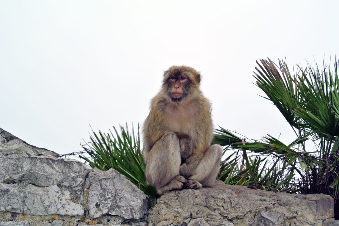 Gibraltar Andalusien