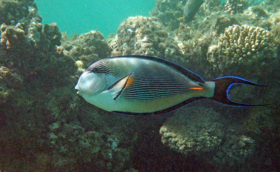 Fisch in Marsa Alam