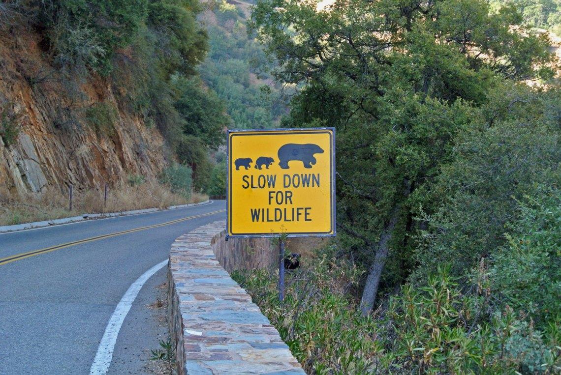 Schild Bärenwarnung