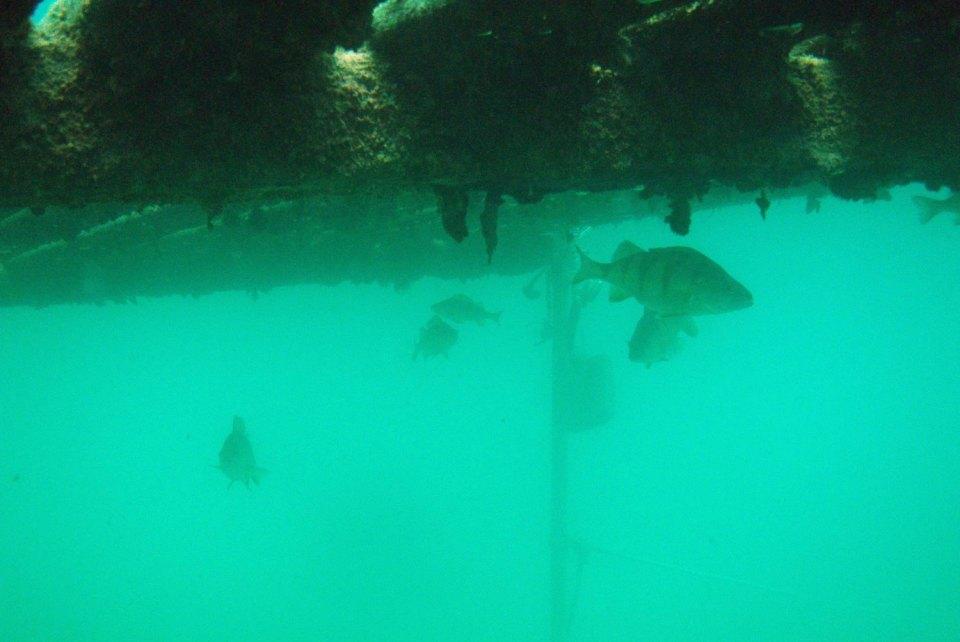 Fische im Neufeldersee