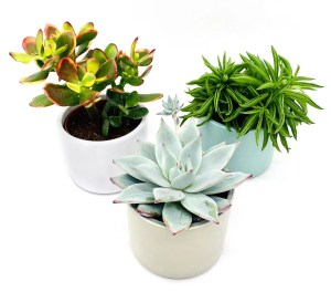 xmas gifts plant subscription