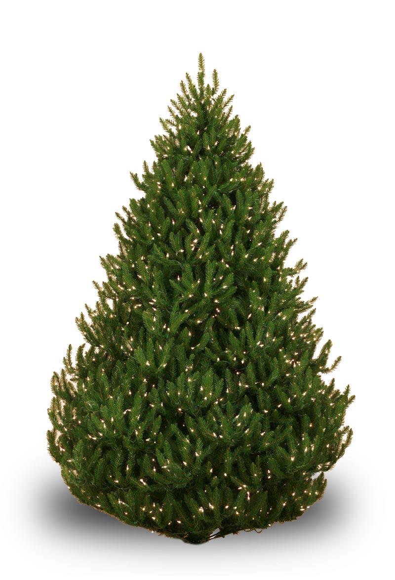 Norway Spruce Prelit Tree  Christmas Lights Etc