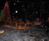 Christmas Tree Farm Cleveland Tx