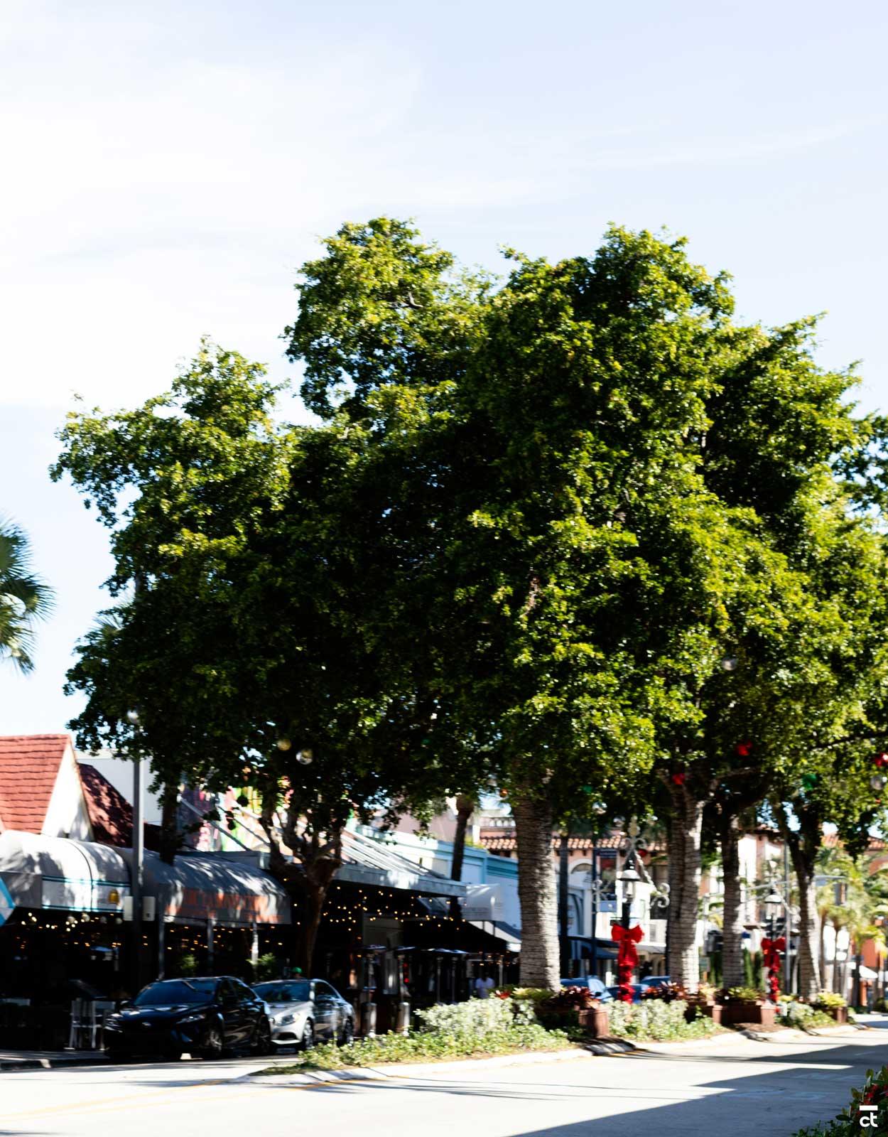 LAS OLAS BOULEVARD - Fort Lauderdale Travel Guide: 25 Things to Do in Fort Lauderdale, Florida - CHRISTOBEL TRAVEL