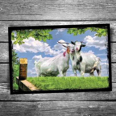 Door County Al Johnson's Goat Snuggle Postcard