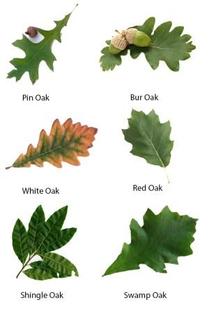 Acorn & Oak Leaf Preserve » The Christopher Farm & Gardens