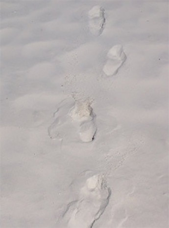 Footprints-345x464
