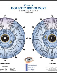 The chart of holistic iridology is leading edge in iris topography this laminated color contains all latest refinements organ also rh christopherpublications