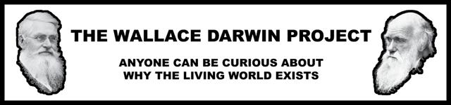 Wallace Darwin Logo 2014-07-24-0640px