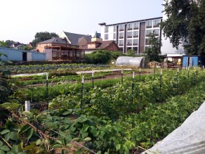 Community gardens are a sign of revitalization. But as this on the very South end of our transect suggests, such gardens also make an area a target for gentrification.