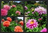 CaliforniaTrip-SanFrancisco-ConservatoryOfFlowers-GGPark-2x2-grid