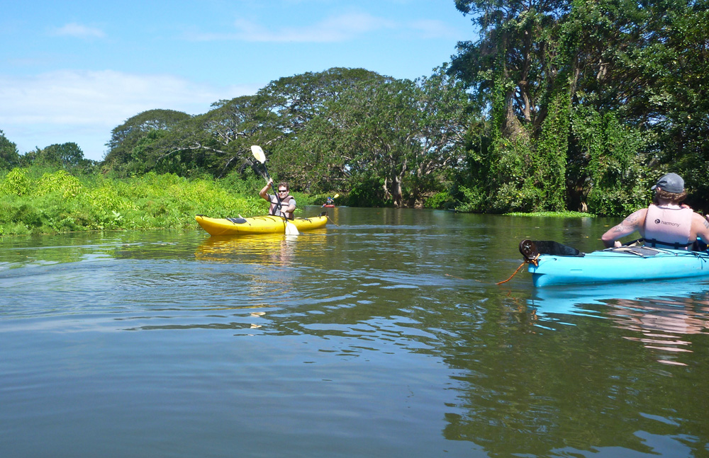 Just kayaking down the Rio Istián to find a caiman alligator — NBD.