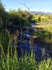 burnaby-lake-walk-IMG_4272