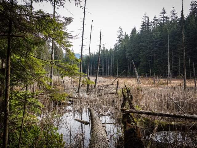 A late Spring view of the Woodhaven Swamp hiking loop in Belcarra Regional Park.